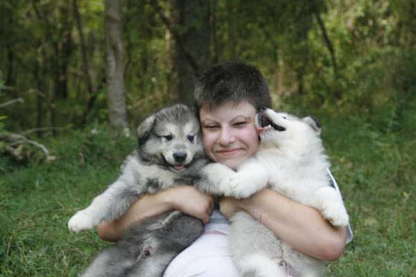 Hudson's Malamutes - Sparkle and Tooter - Alex with puppies prior to filming